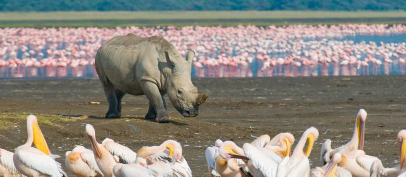 1 day lake nakuru safaris