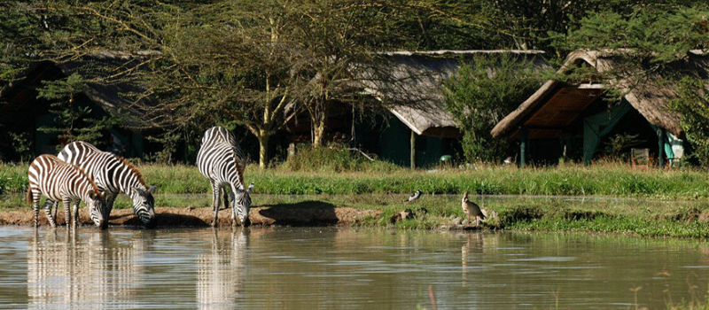 8 Days Masai Mara - Lake Nakuru - Samburu - Sweetwaters - Treehotel