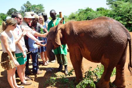 Daphne & David Sheldrick's Elephant Animal Orphanage Kenya