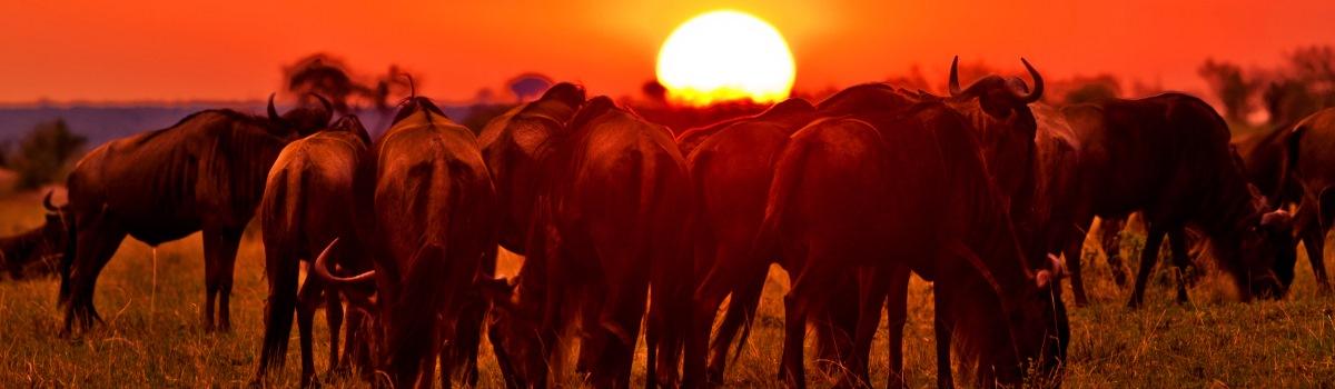 The-Masai-Mara-Safaris-Kenya banner