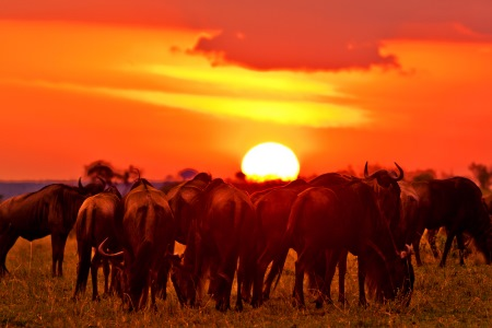 The-Masai-Mara-Safaris-Kenya