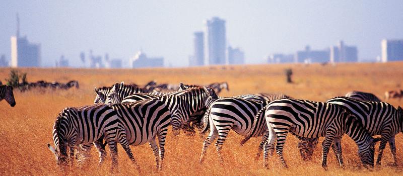1 day nairobi nationa park