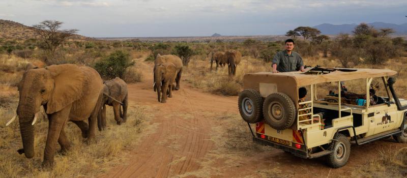 10 Days Masai mara - Lake Nakuru - samburu - Sweetwaters - Treehotel - Amboseli
