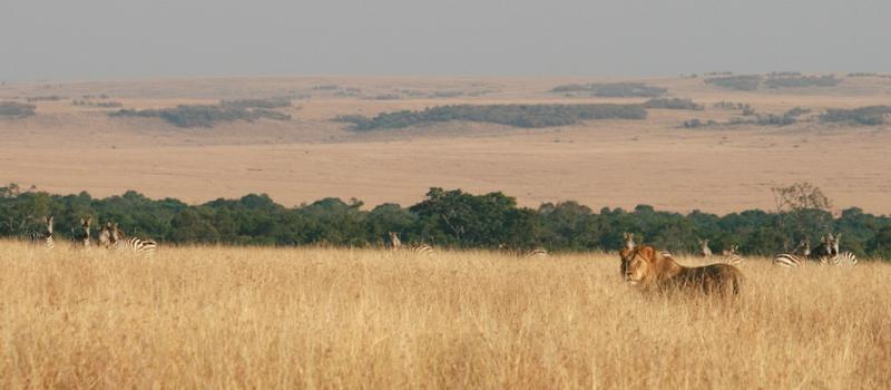 Masai Mara Migration safaris kenya